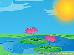 Image titled Grow Lotus Flower Step 17
