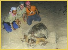 Volunteer to help sea turtles in the Riviera Maya, Mexico   http://www.playabestbuy.com/blogs/rivieramayarealestate/archive/2013/05/08/volunteer-to-help-sea-turtles-in-the-riviera-maya-mexico.aspx