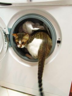 our cat Teddy helping us doing the laundry  hahahaha  memories, my cat used to love to sleep in the dryer