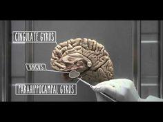 ▶ Hypothalamus and Limbic System - UBC Flexible Learning - YouTube