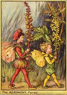 Agrimony fairies.