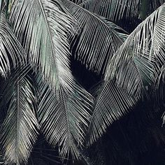 Tropical vibes  #soko #home #sokohome #homemade #homedecor #homesweethome #homedecoration #deco #decor #design #decoration #tropical #leaf #palm #tree #green #nature #sun #summer #love #lifestyle #