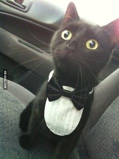 24 Stupid Cat Pics And Memes That'll Have You Feline Good - Memebase - Funny Memes Cute Funny Animals, Cute Baby Animals, Animals And Pets, Funny Cats, Cute Cats And Kittens, I Love Cats, Kittens Cutest, Ragdoll Kittens, Tabby Cats