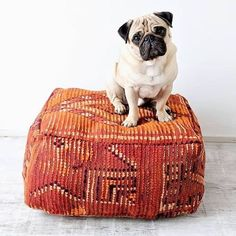 Poufs are not only meant for humans, in fact Dogs look better on them