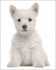 DogGrooming02.jpg (452×559)