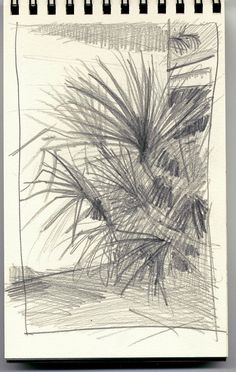 Palmetto drawing from St. Augustine FL. I did the oil painting from this.