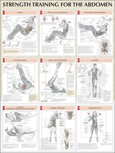 Strength Training For The Abdomen Chart