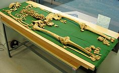 Bronze Age skeleton of dagger-clutching Racton Man could have been a King or priest. Read this fascinating discovery. Human Skeleton, Prehistory, Bronze Age, Bury, Priest, Ancient History, Archaeology, A Table, Discovery