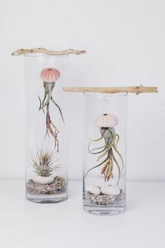 Don't you just love air plants? They are just the most adorable plants are they are of the easiest plants to care for too! Here are Gorgeous Air Plant Display ideas perfect for any home! Air Plant Display, Plant Decor, Plant Wall, Succulent Display, Succulent Ideas, Succulents Garden, Planting Flowers, Succulent Planters, Decoration Plante