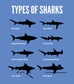 Types of Shark
