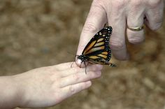 Monarch butterfly resting on child's hand with grand parent Knoll Landscape Design
