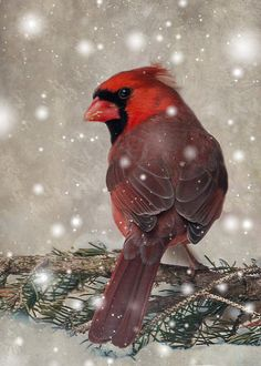 """Male Cardinal In Snow"" Print By Patti Deters #cardinal #snow"