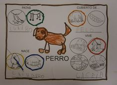 LA CLASE DE MIREN: mis experiencias en el aula: Proyecto ANIMALES DE GRANJA. Animal research, no downloadable documents.