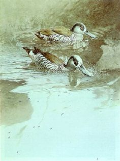 View Australian pink-eared ducks by Raymond Harris Ching on artnet. Browse upcoming and past auction lots by Raymond Harris Ching.