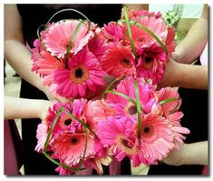 gerbera daisy bouquets- Each brides maid will have a bouquet like this just in one of the 4 colors