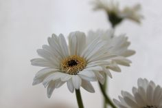 White Plants, Flowers, Plant, Planets