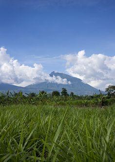 Volcanoes National Park landscape - Rwanda