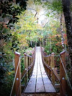 Suspended bridge on the Florida Trail