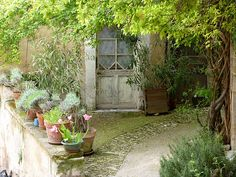 Sweet little garden Avignon, France. If I'm lucky this is where I go when I close my eyes.