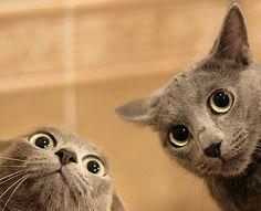 """Catnip? What catnip?"""