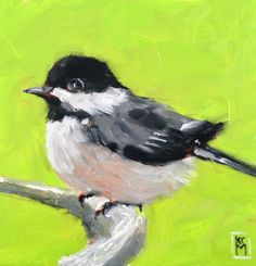 Kelley MacDonald's Daily Paintings: My Little Chickadee, 6x6 inch Oil Painting by Kelley MacDonald
