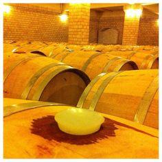 This Reminds me of Portugal and my grandparents making wine! #vinhosdobrasil #vinho #wine...