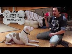 Discover New Ways to Play With a Dog Without Toys - DogVills