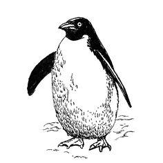 Adelie Penguin 100% Cotton T-Shirt