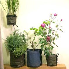 Un jardin intérieur cultivé dans des BACSAC au Japon : pot suspendu 3L en géotextile, pot rond en géotextile 10L et 3L et pot rond 10L couleur Ardoise