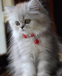 Good morning everyone . Sending love and kisses ❤️#cats #dailyfluff #cutekitten #love
