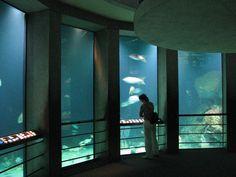 Google Image Result for http://upload.wikimedia.org/wikipedia/commons/6/68/Baltimore_Aquarium_-_Big_tank.jpg