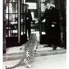 Cartier leopard