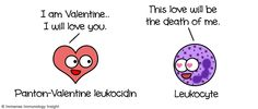 pathogen is a leukocidin (cidin meaning kills) -- a leukocyte killer