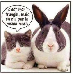 chat-lapin-humour-drole-blague chat trop mighonchat trop mignon et drole trop mignon dessinphoto de chat mignon et rigolochat drolevideos de chats trop mignonschat mignon dessin Cute Cats, Funny Cats, Funny Shit, Funny Jokes, Hilarious, Sarcastic Humor, Animals And Pets, Funny Animals, Cute Animals