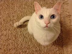 Looks just like my kitty!