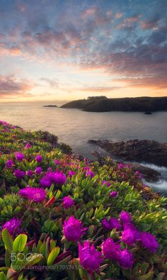 Hurry up! by aurelienbernard  sky flowers sunrise sea water flower Hurry up! aurelienbernard