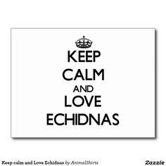 Keep calm and Love Echidnas Postcard