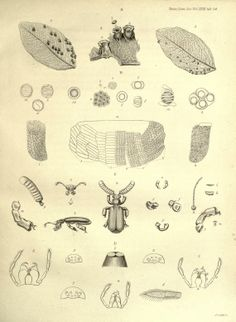 Transactions of the Linnean Society of London (1841)