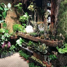 Garden Cafe, Garden Shop, Home And Garden, Small Garden Nursery, Garden Center Displays, Flower Studio, Cold Frame, Interior Garden, Tropical Garden