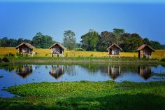 Top 7 Things to do in Majuli – Largest River Island in the world Brahmaputra River, States Of India, Summer Heat, World Records, India Travel, Best Hotels, The Locals, River Island, Swimming Pools