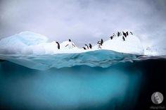 منوعات: صور مذهلة للحياة البرية في القطب الجنوبي (8 صور)   شبكة أبو نواف