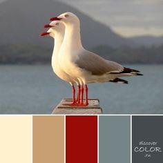 Морские чайки   DiscoverColor.ru