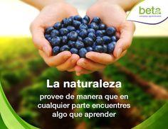 La naturaleza proveerá. ¡Beta, creciendo juntos!