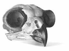 animal skull identification