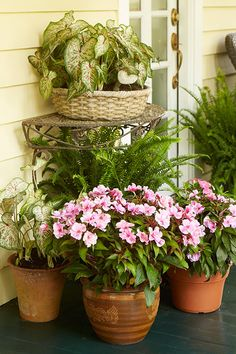 Creative Container Gardening: Add color to shaded spots with ferns, caladiums, and New Guinea impatiens | By @costafarms