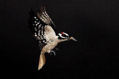 Extrem realistische Vögel aus Papier - detailverliebt.de