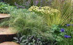 The magic of ornamental grasses with a nod to Piet Oudolf...Carex comans 'Frosted Curls', Alchemilla mollis, purple sage, Molinia caerulea subsp. caerulea 'Variegata' -