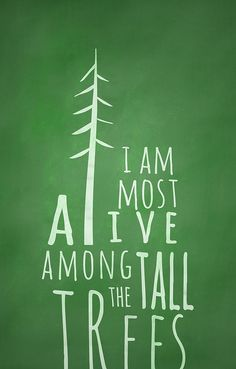 ALIVE AMONG THE TALL TREES by matt edward, via Flickr