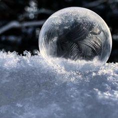 """Fräulein Nellüüü on Instagram: """"Bevor der Winter ganz von dannen zieht, reihe ich mich in die vielen wunderschönen gefrorenen Seifenblasen-Bilder ein. Dieses Jahr hat es…"""" Flora, Celestial, Outdoor, Instagram, Frozen Bubbles, Nice Asses, Pictures, Outdoors, Plants"""