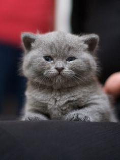 Sweet baby. Looks like our MooMoo!